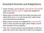 grassland animals and adaptations