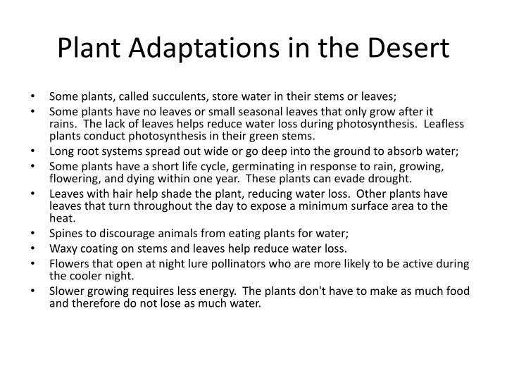 Plant Adaptations in the Desert