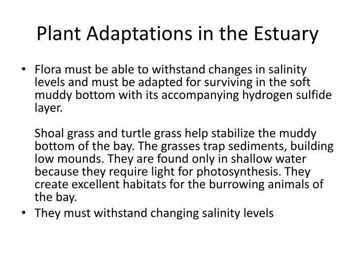 Plant Adaptations in the Estuary