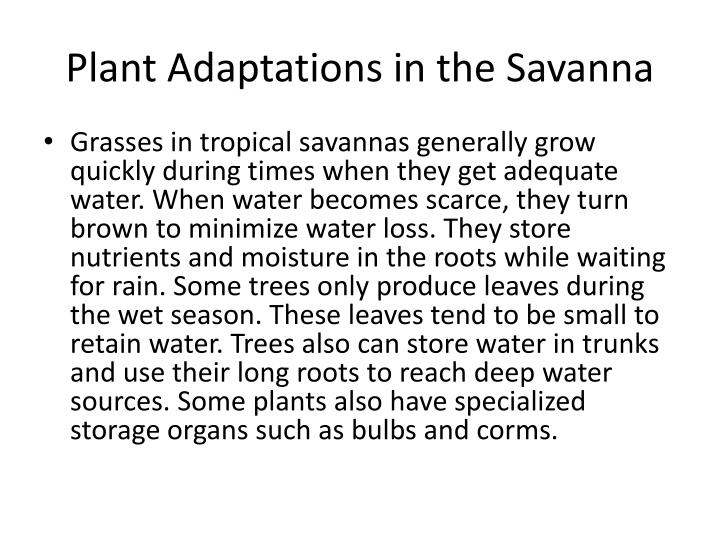Plant Adaptations in the Savanna