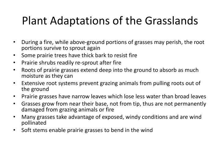 Plant Adaptations of the Grasslands