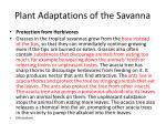 plant adaptations of the savanna1