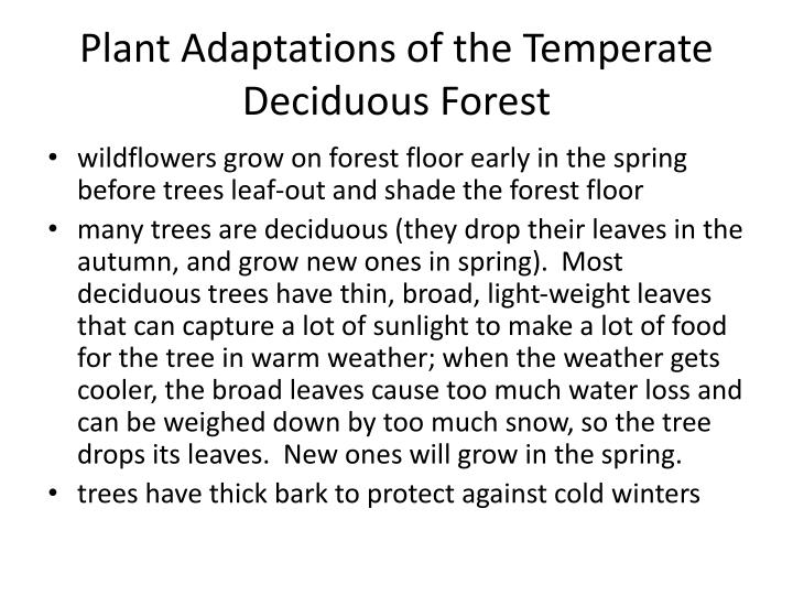 Plant Adaptations of the Temperate Deciduous Forest