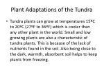 plant adaptations of the tundra