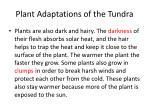 plant adaptations of the tundra1