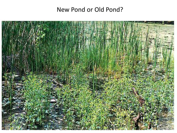 New Pond or Old Pond?