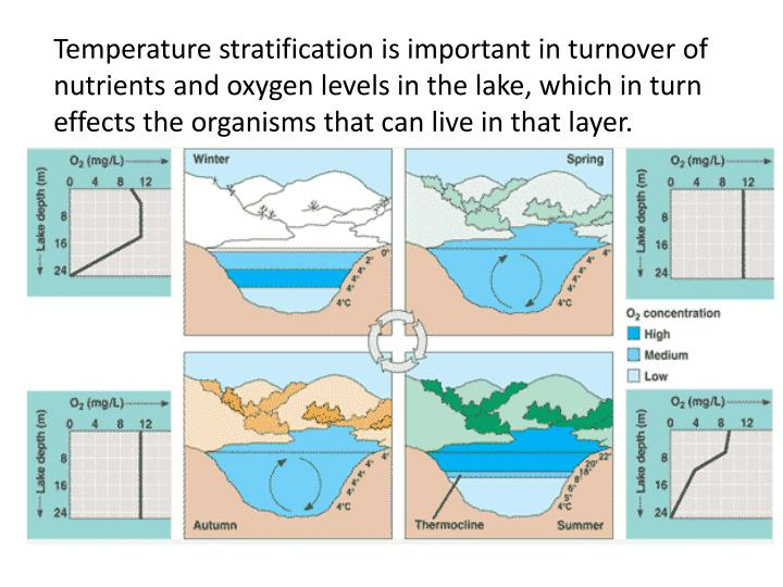 Temperature stratification is important in turnover of nutrients and oxygen levels in the lake, which in turn effects the organisms that can live in that layer.