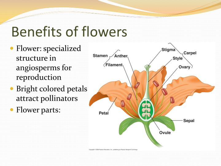 Benefits of flowers