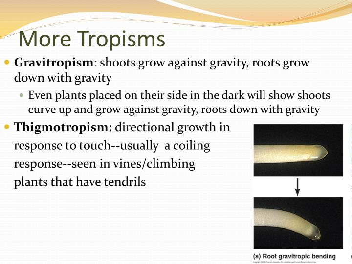 More Tropisms