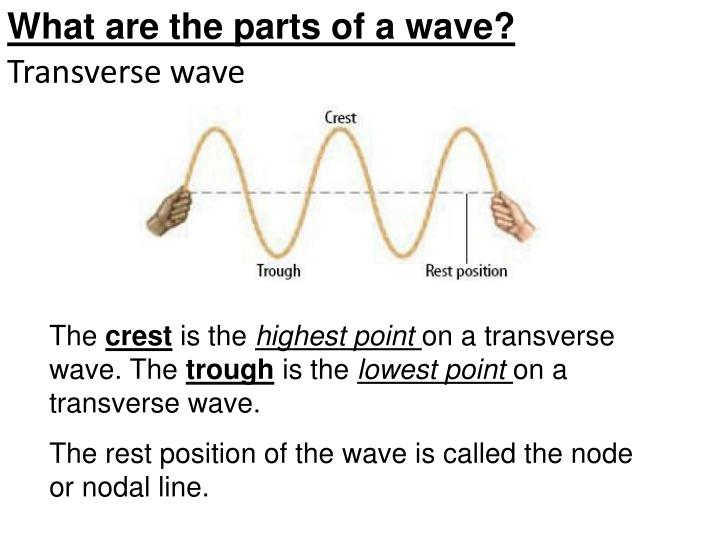 What are the parts of a wave?