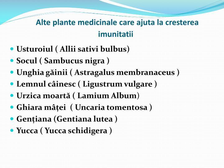 Alte plante medicinale care ajuta la cresterea imunitatii
