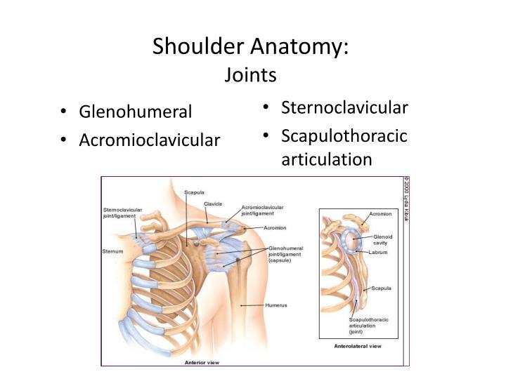 Shoulder Anatomy: