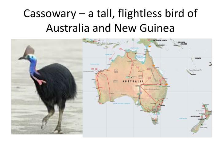 Cassowary – a tall, flightless bird of Australia and New Guinea