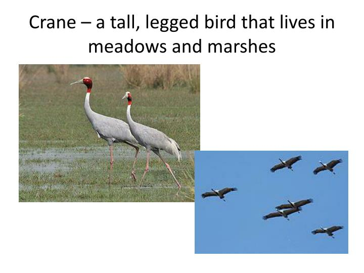 Crane – a tall, legged bird that lives in meadows and marshes