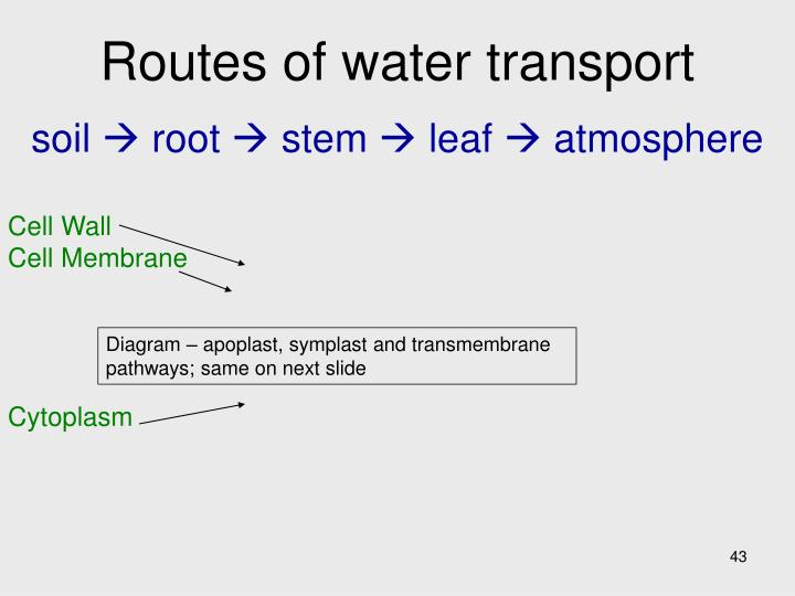 Routes of water transport