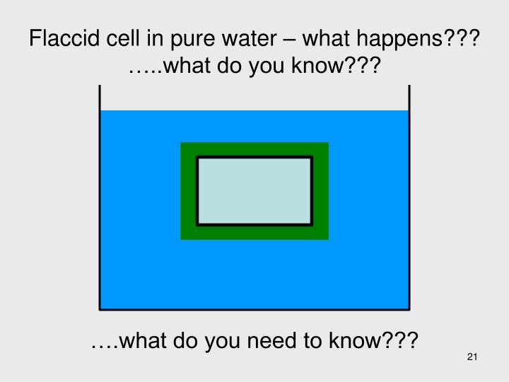 Flaccid cell in pure water – what happens???