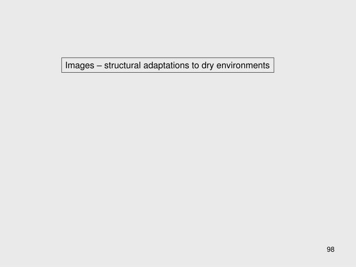 Images – structural adaptations to dry environments