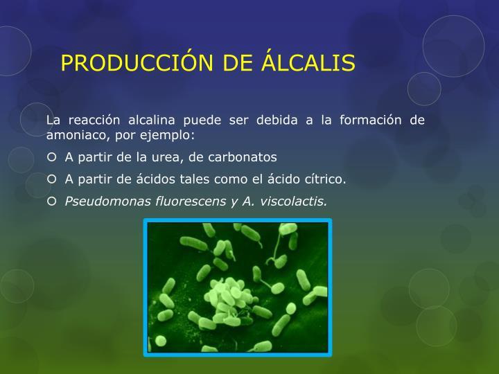 PRODUCCIÓN DE ÁLCALIS
