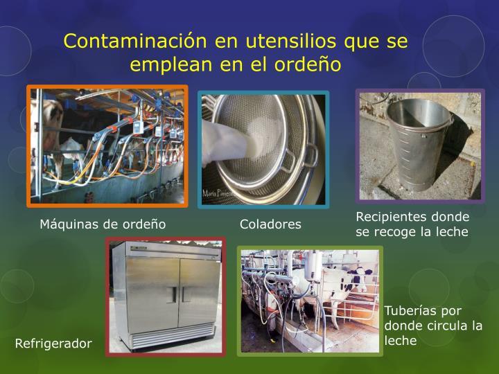 Contaminación en utensilios que se emplean en el ordeño