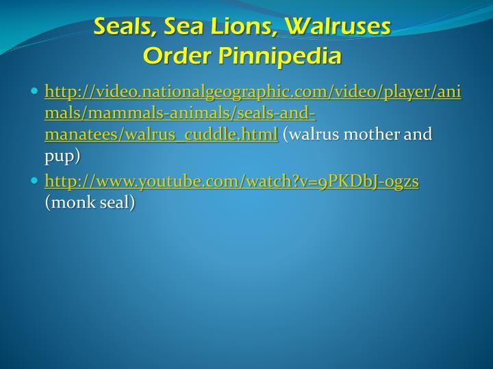 Seals, Sea Lions, Walruses
