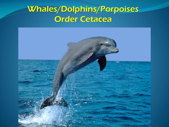 Whales/Dolphins/Porpoises