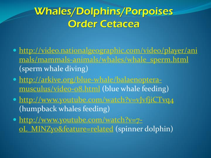 Whales/Dolphins/Porpoises