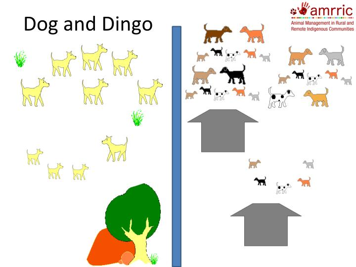 Dog and Dingo