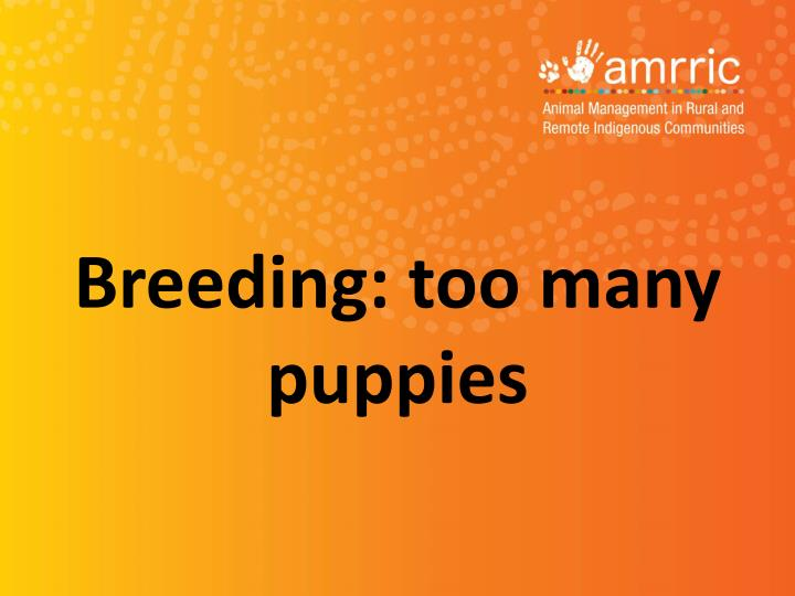 Breeding: too many puppies