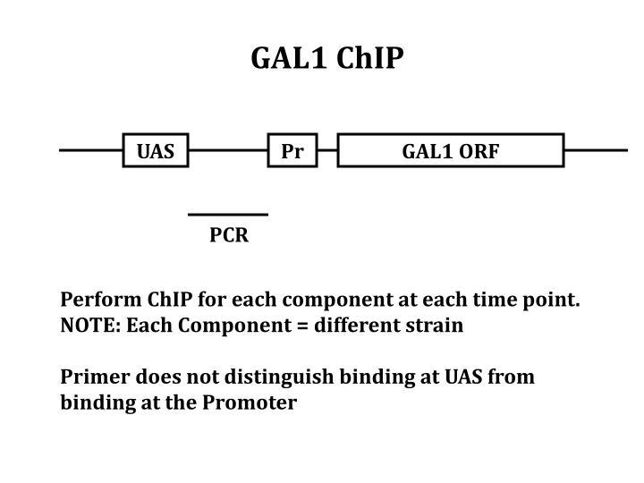 GAL1 ChIP