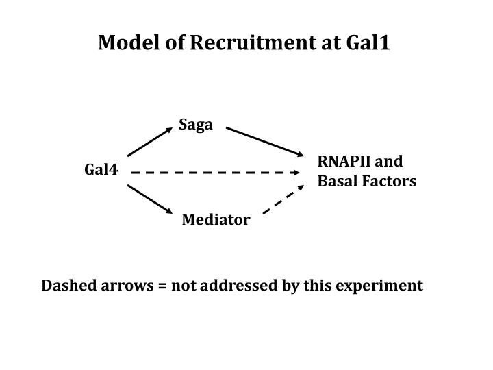 Model of Recruitment at Gal1