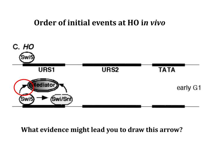 Order of initial events at HO i
