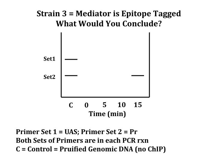 Strain 3 = Mediator is Epitope Tagged
