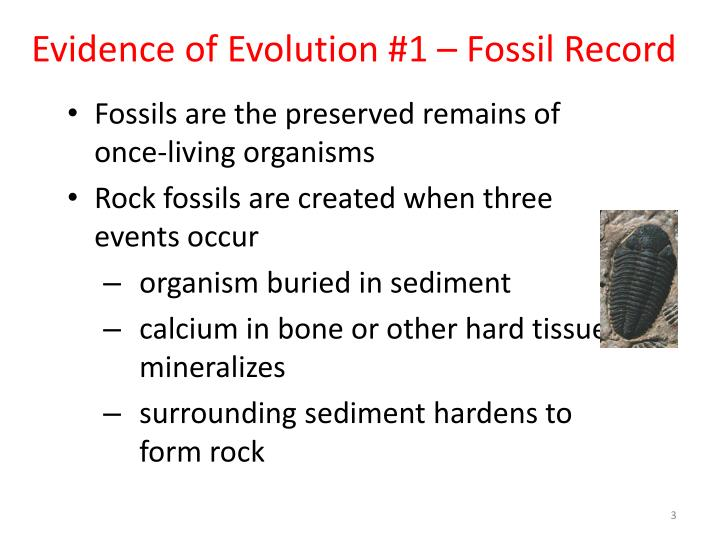 Evidence of evolution 1 fossil record