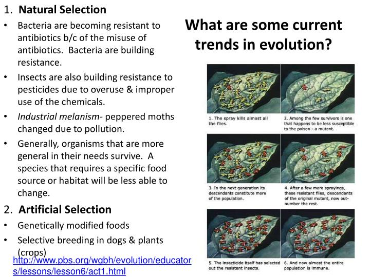 What are some current trends in evolution?