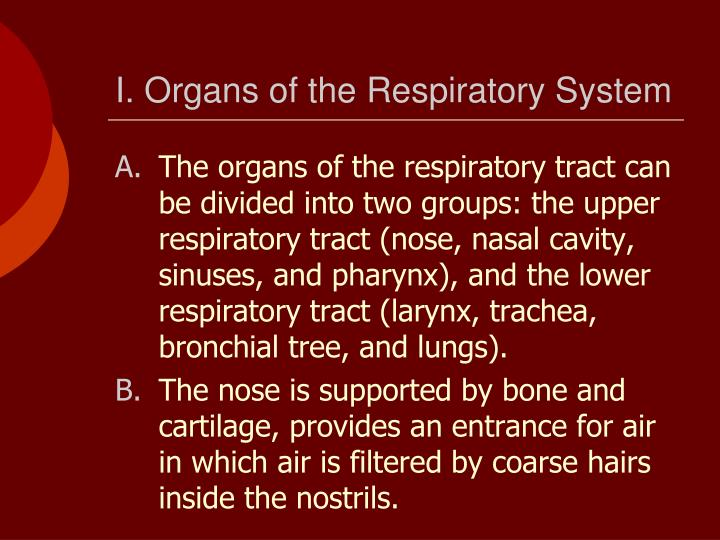 I. Organs of the Respiratory System