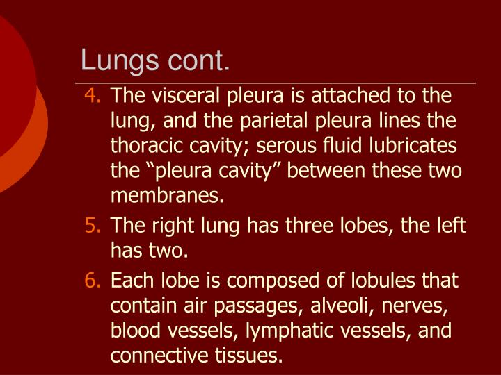 Lungs cont.