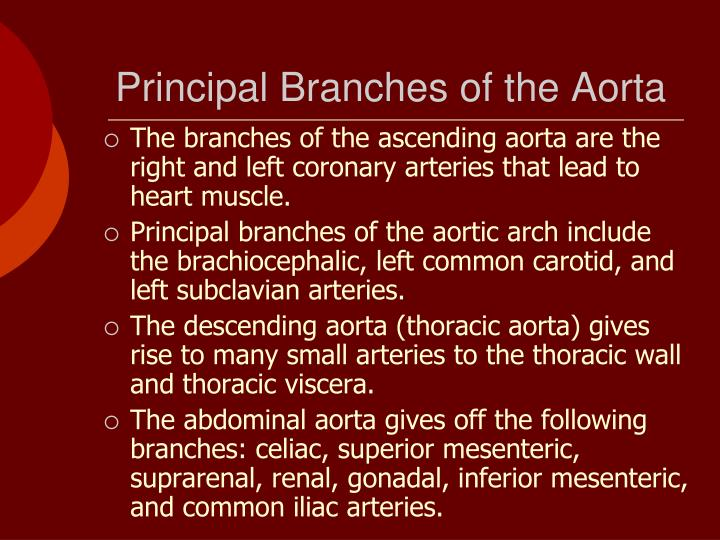 Principal Branches of the Aorta