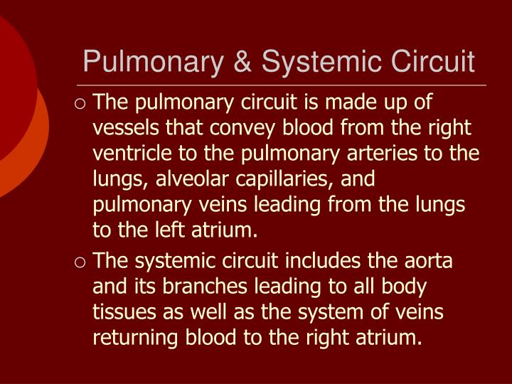 Pulmonary & Systemic Circuit