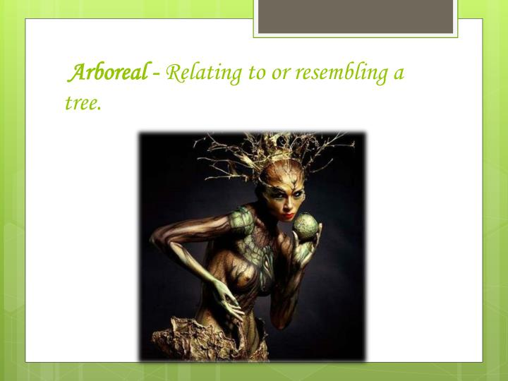 Arboreal relating to or resembling a tree