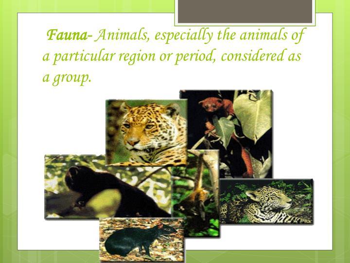 Fauna-