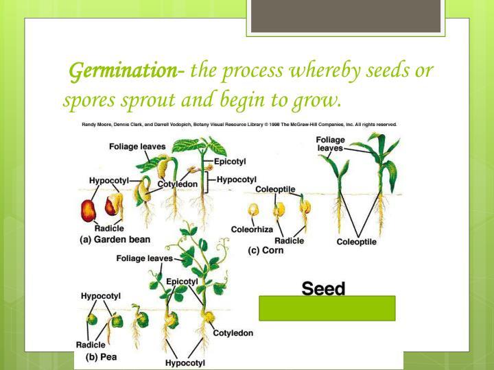 Germination-