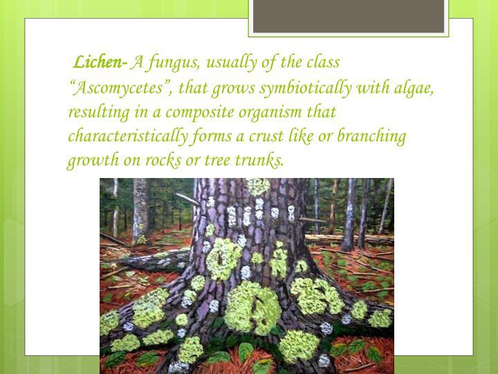 Lichen-