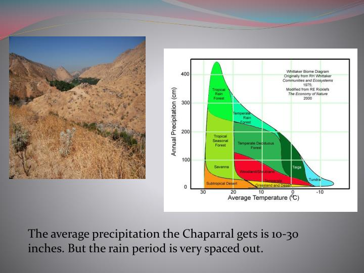 The average precipitation the Chaparral gets is 10-30 inches. But the rain period is very spaced out.