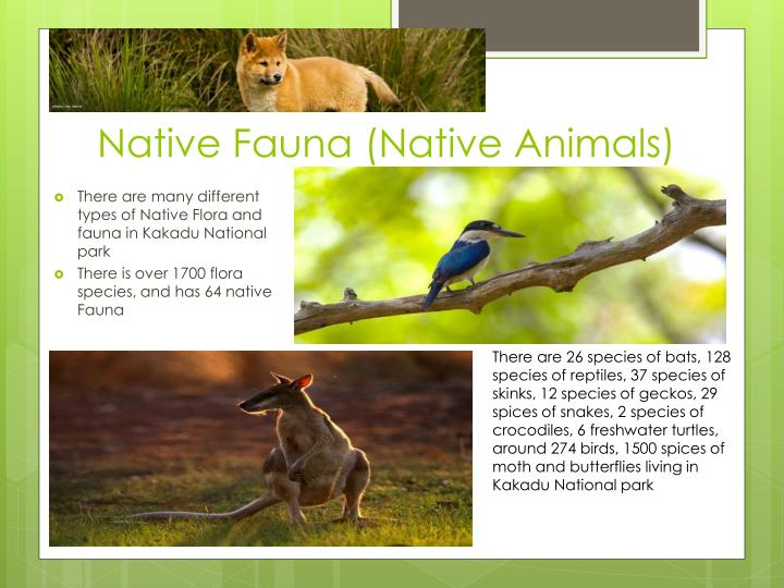 Native Fauna (Native Animals)