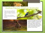 native fauna native animals