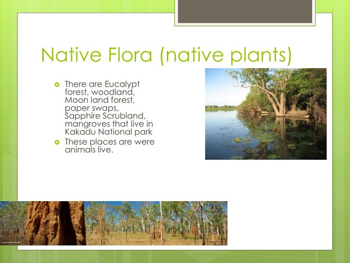 Native Flora (native plants)