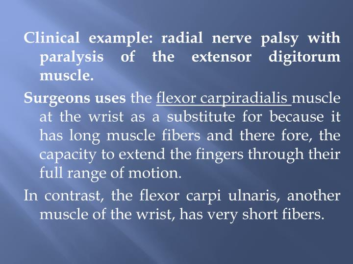 Clinical example: radial nerve palsy with paralysis of the extensor