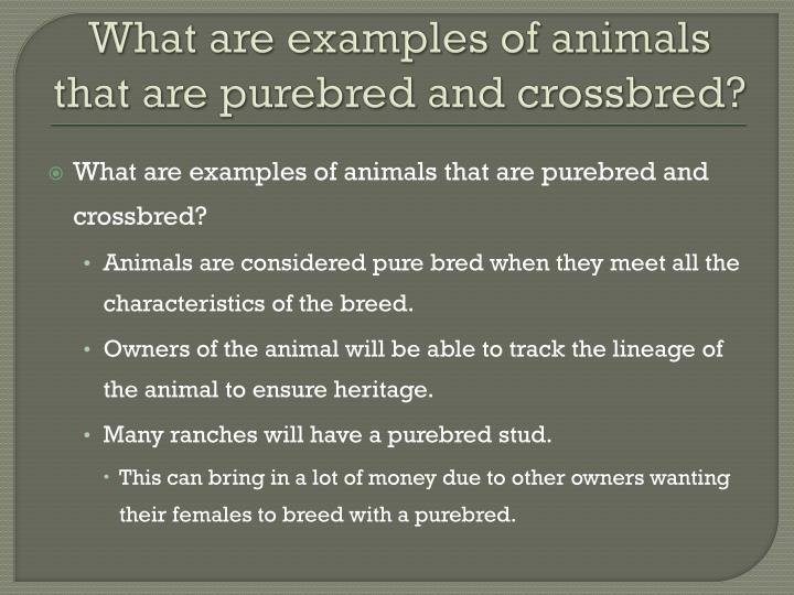 What are examples of animals that are purebred and crossbred
