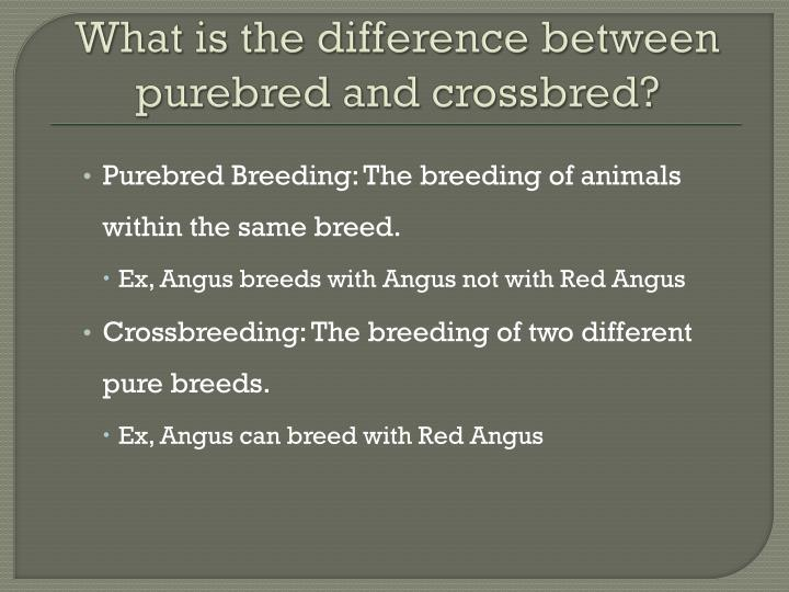 What is the difference between purebred and crossbred