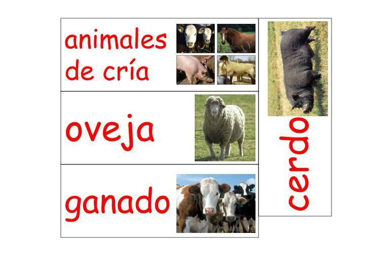 animales         de cría